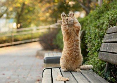 gatitorezando